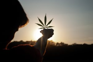 A dark picture. Someone is holding a cannabis leaf into the setting sun. You only see their head and arm from behind, all very dark.