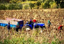 Labor migration in Europe: terrible working conditions, poor wages
